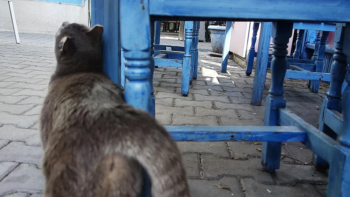 turismo en turquía gatos sobrepeso