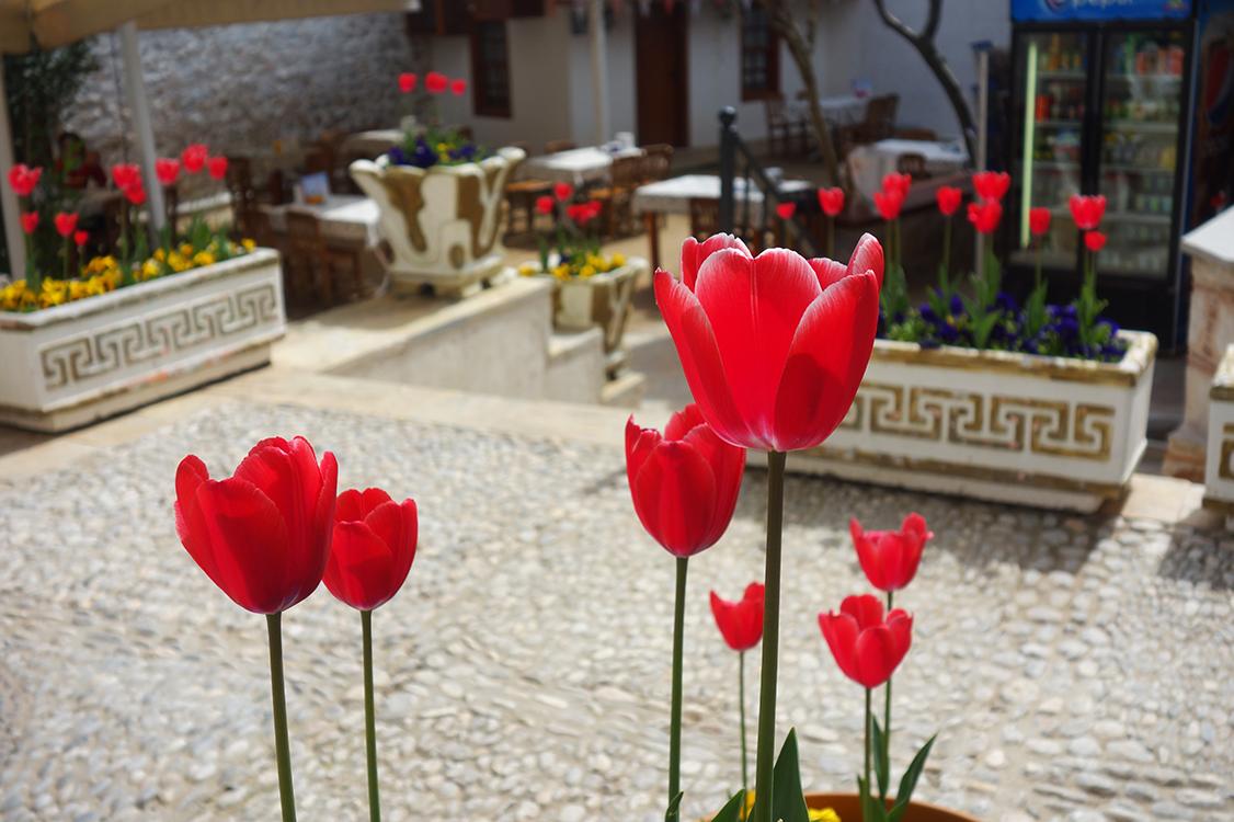 turismo en turquía mugla flores