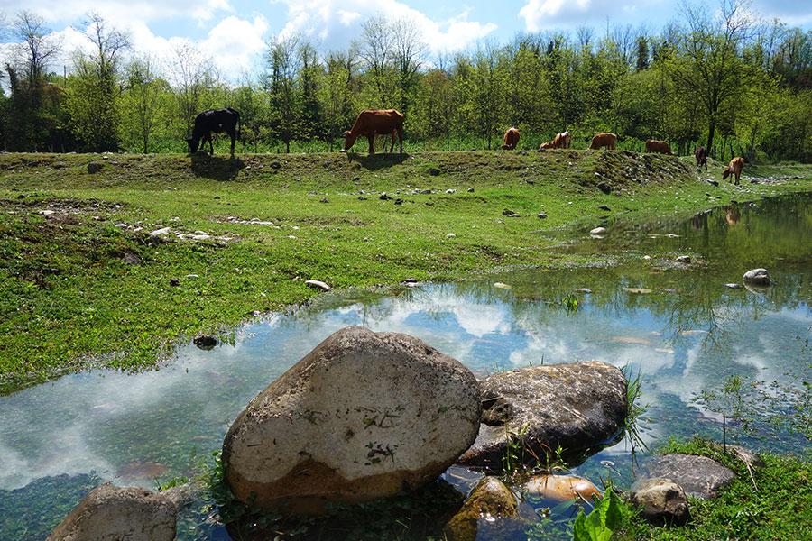 canyon-martvili-georgia-vacas