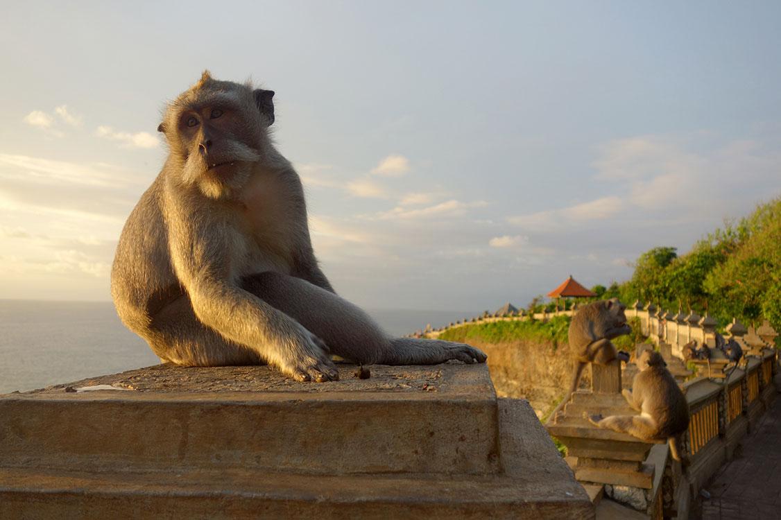 bali-templos-monos