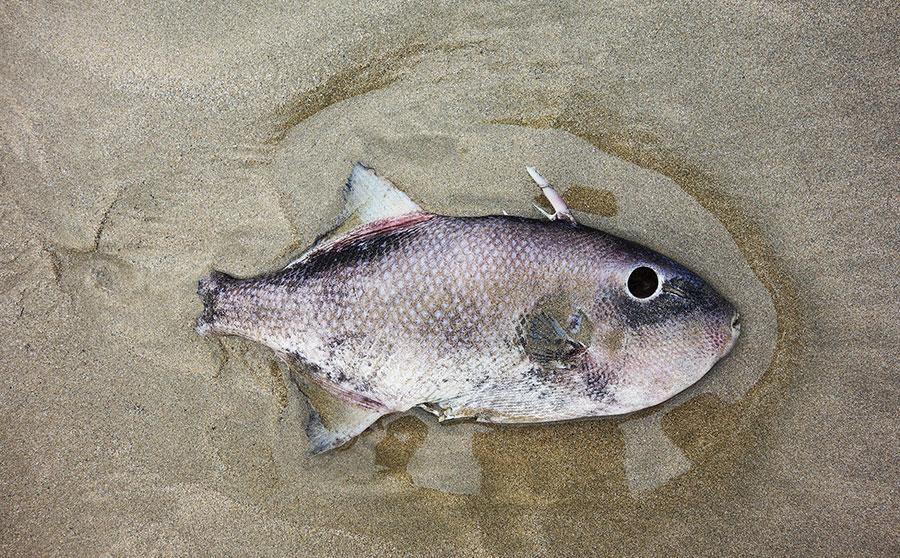 pescado-sri-lanka