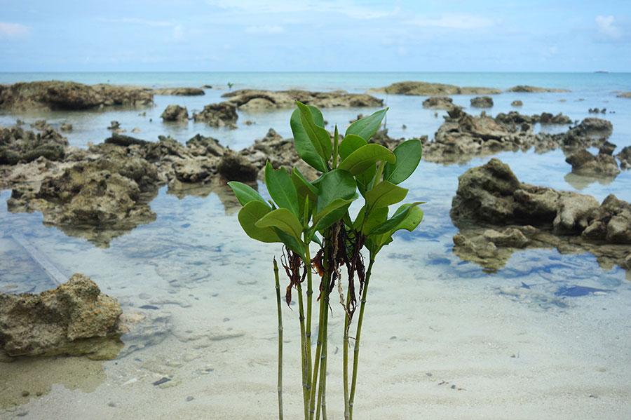 playas-paradisiacas-indonesia