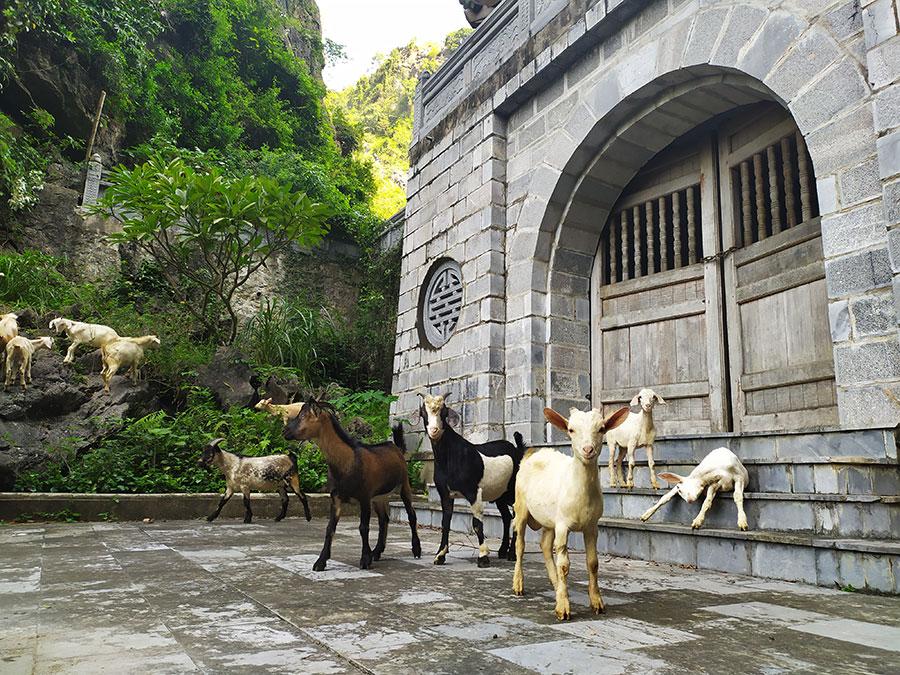 animales-en-vietnam