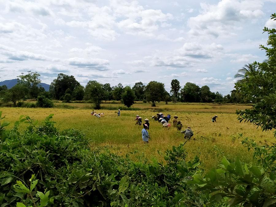 campos-trigo-don-det