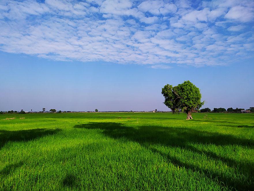 campos-verdes-cielo-azul