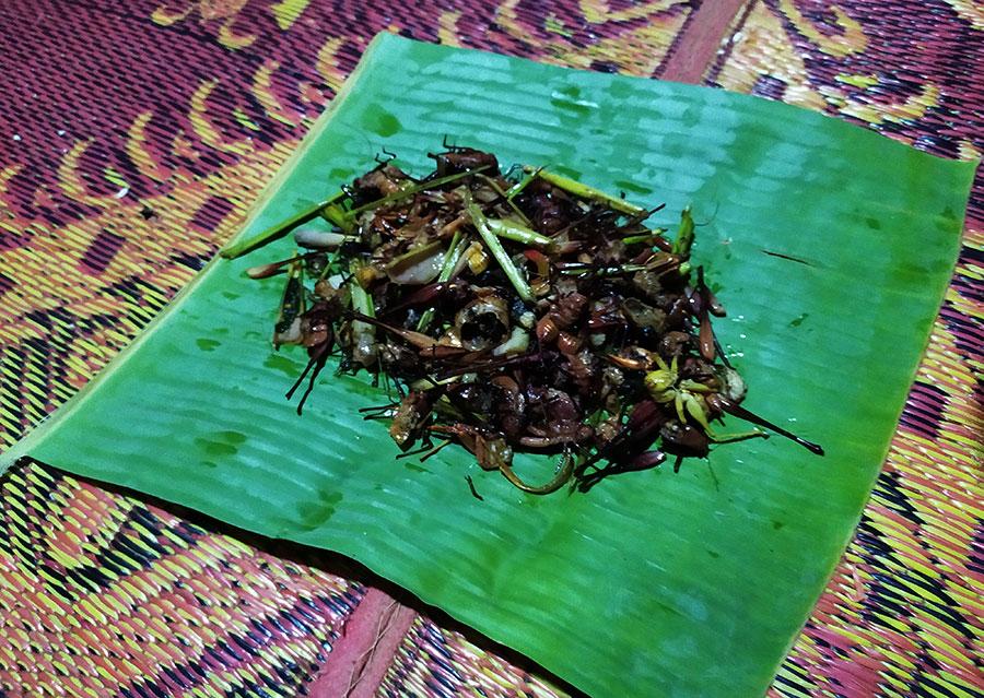 comida insectos