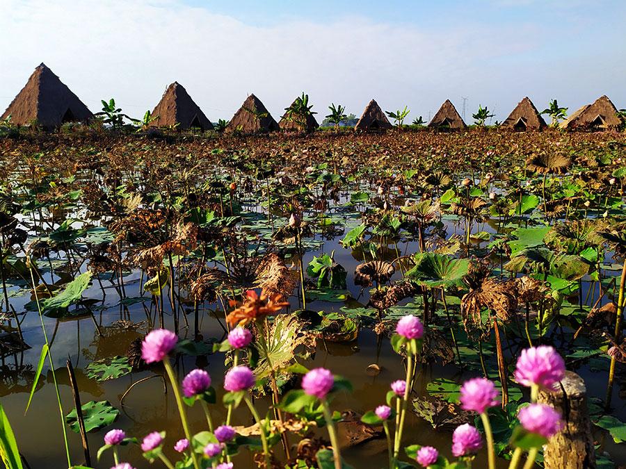 flor loto-camboya