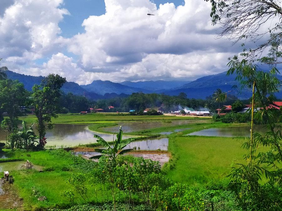 arrozales-indonesia