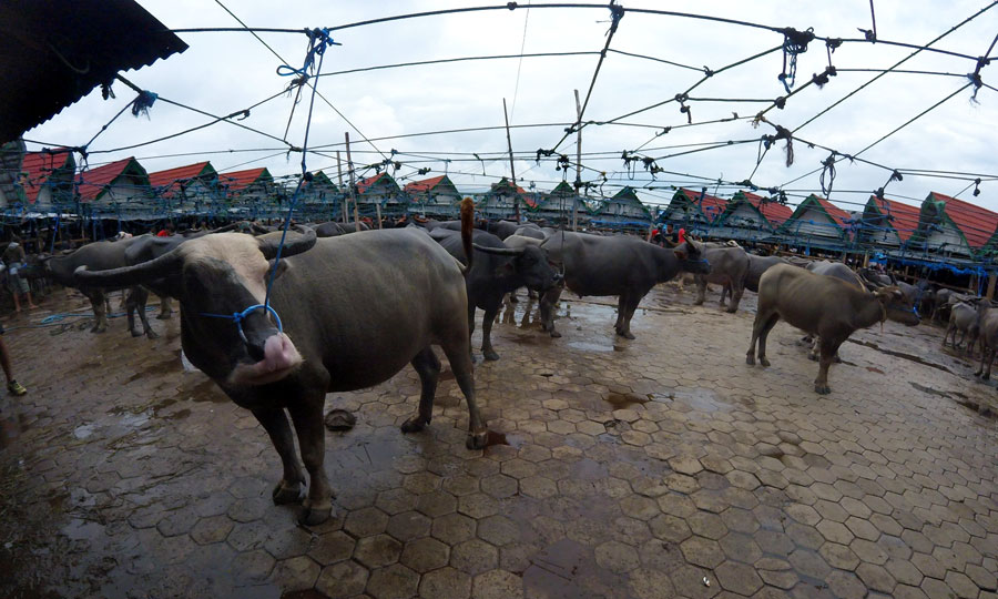 mercado-bufalos