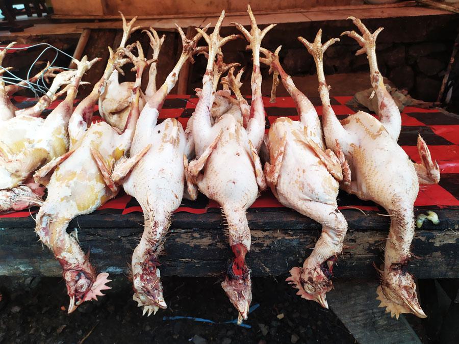 mercado-tomohon-animales-salvajes