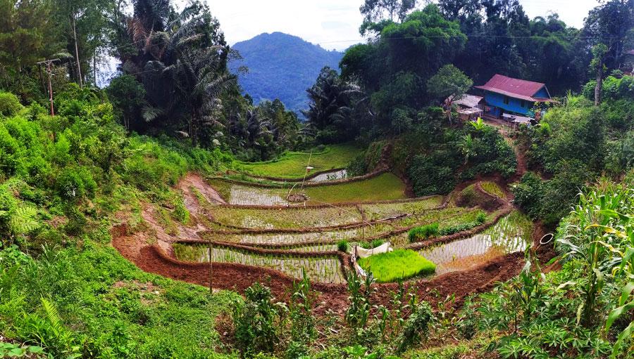 tana-toraja-trekking